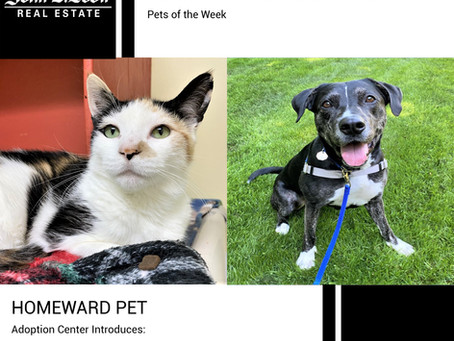 Furry Friends Friday Pet of the Week! June 25, 2021