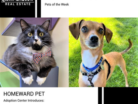 Furry Friends Friday Pet of the Week! April 26, 2021