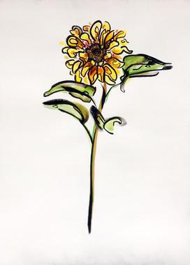 Starflower I