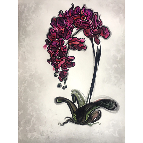 Orchid X
