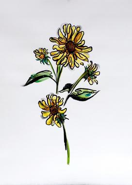 Starflower IV