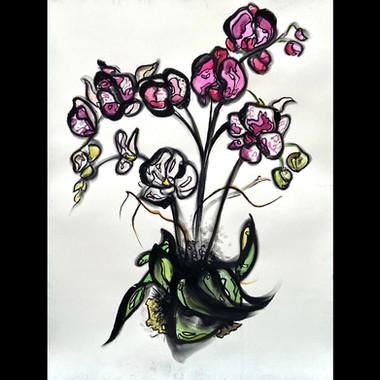 Orchid: Bouquet