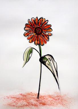 Starflower: Red Giant, Dust