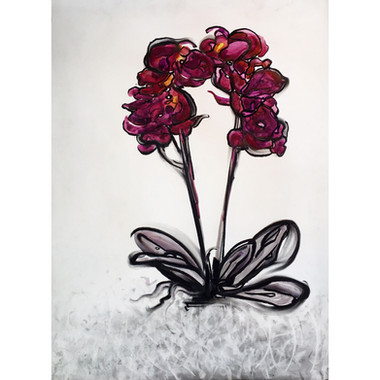 Orchid VIII