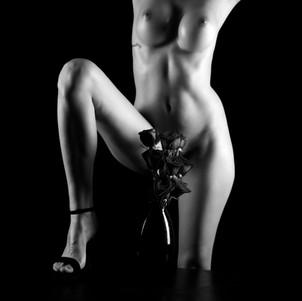 Paloma & the Roses