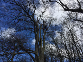 Bad tree work affects tree safety and costs more in the long run!