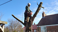 How do you choose a good tree surgeon?