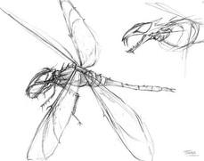 Dragonfly monster sketch