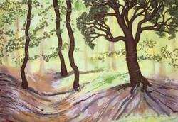 Sun Lit Woods