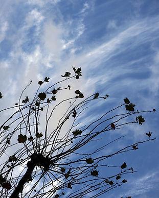 Autumn350x450.jpg