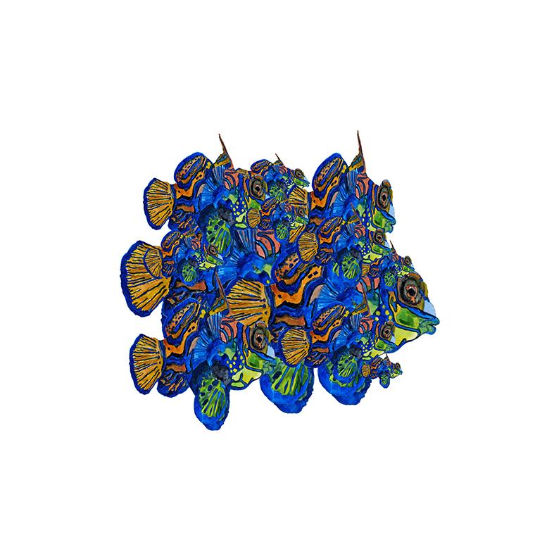 Mandarin fishes, 2019