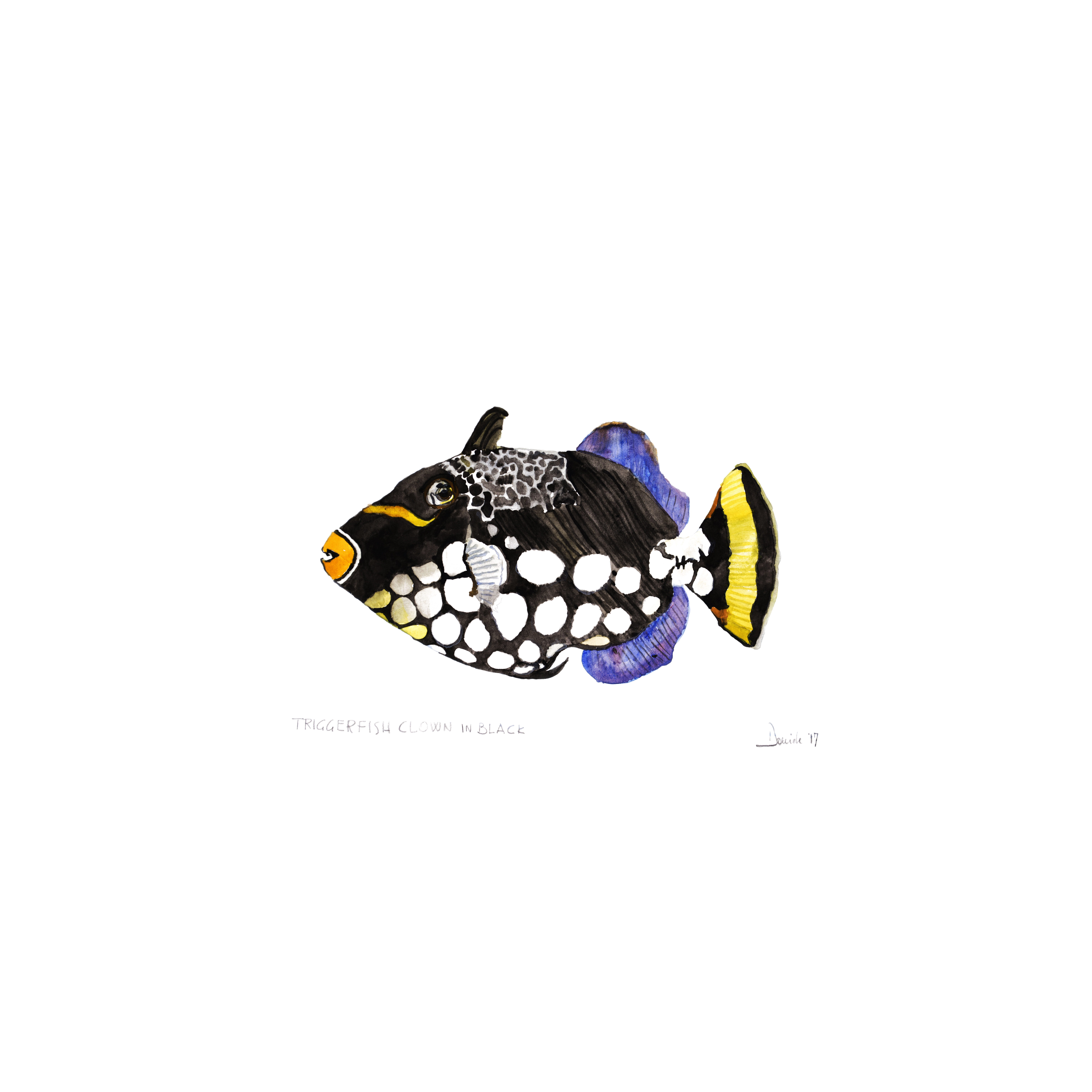 Triggerfish Clown in Black, 2018
