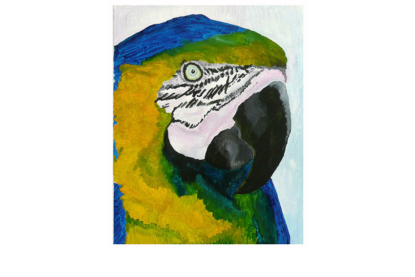 Parrot 2, 2008 Acrylic on canvas, 20'' x 16''