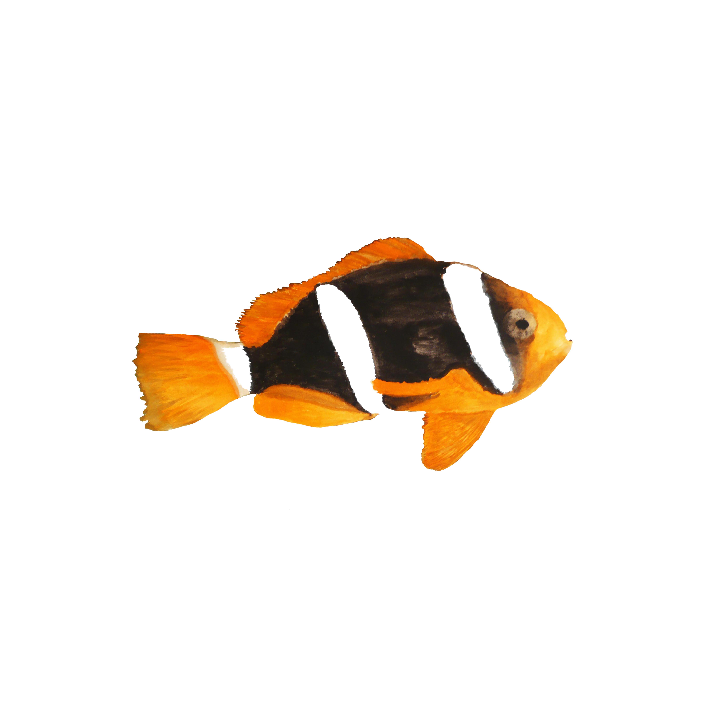 Nemo, 2013