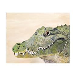 c 6 Coccodrillo, 2012, Acrylic on canvas