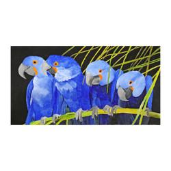 a pappagalli blu