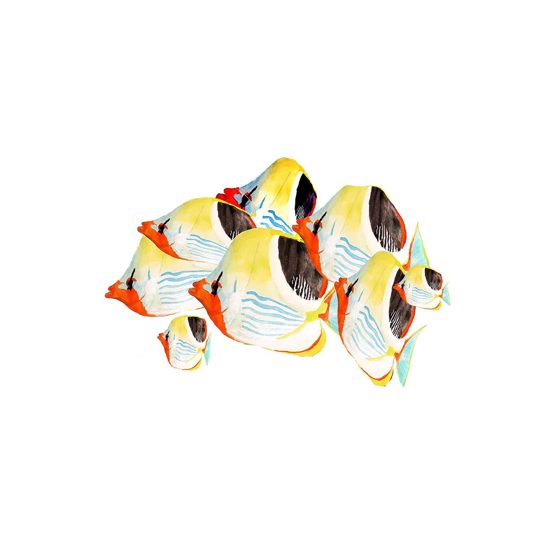 Macchiolina lacca