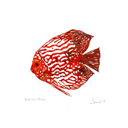 Pesce bianco e rosso, 2017