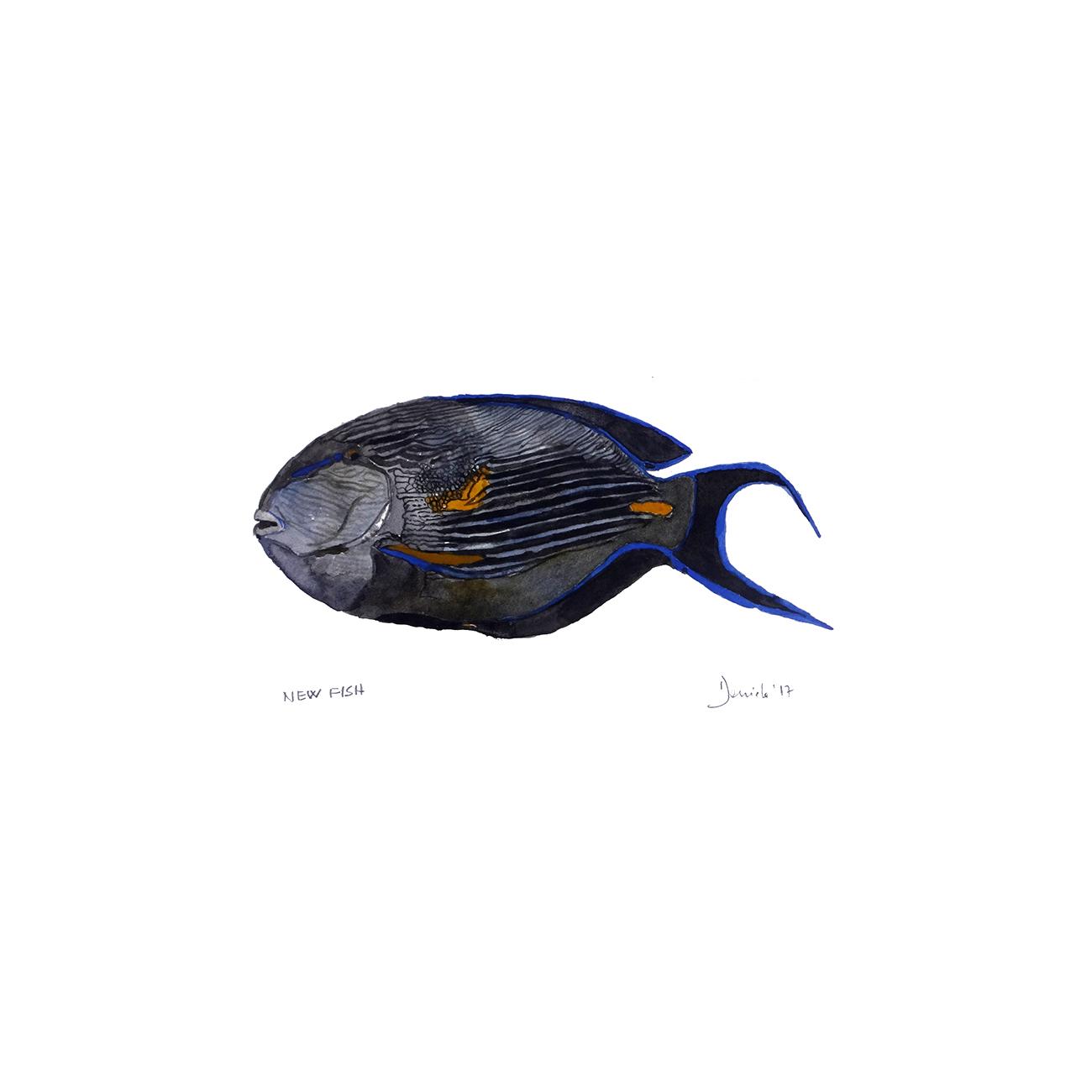 New fish, 2017