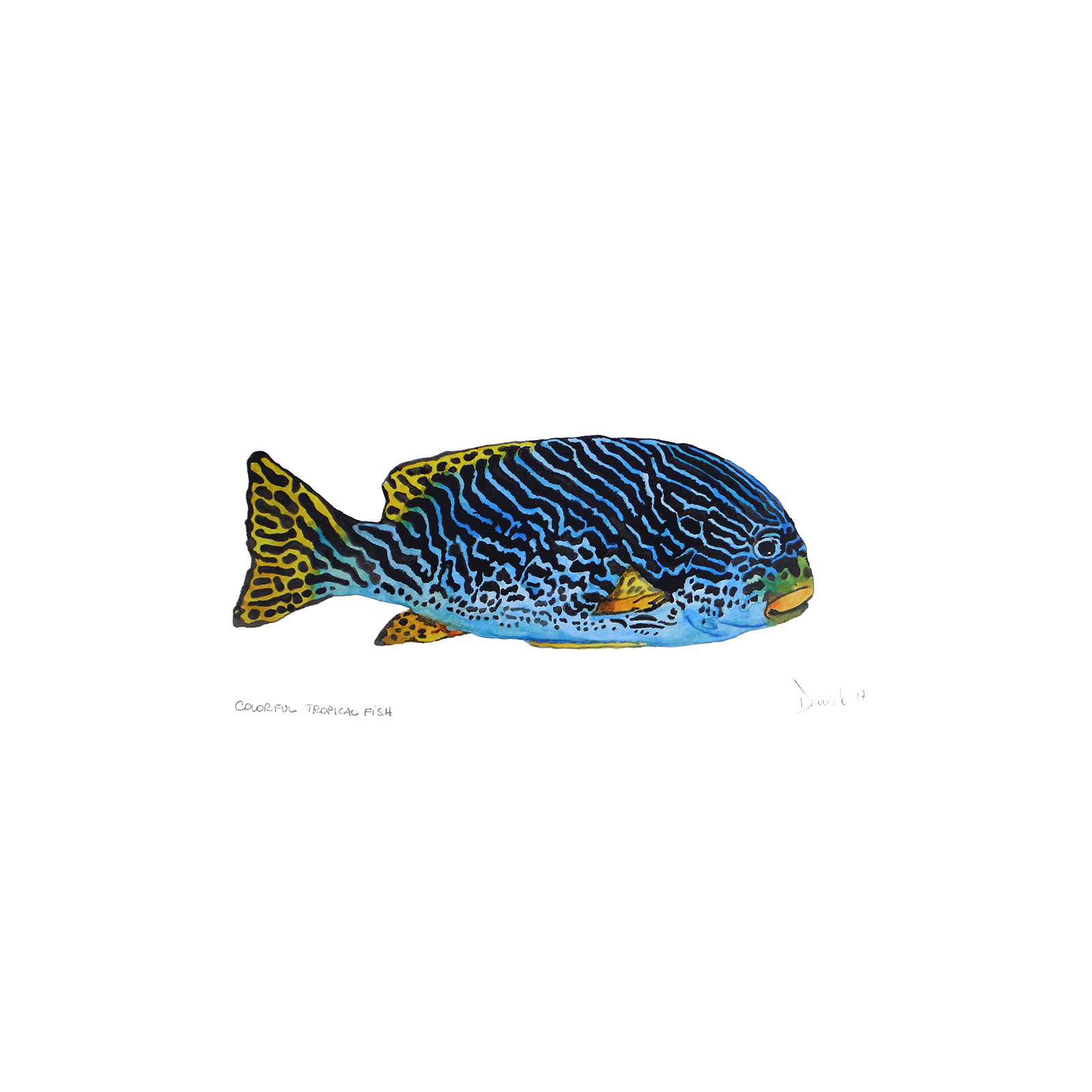 Colorful tropical fish, 2017