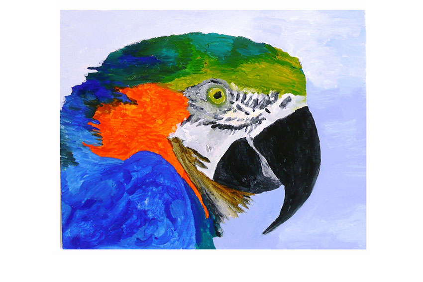 Parrot 1, 2008, Acrylic on canvas, 20'' x 16''