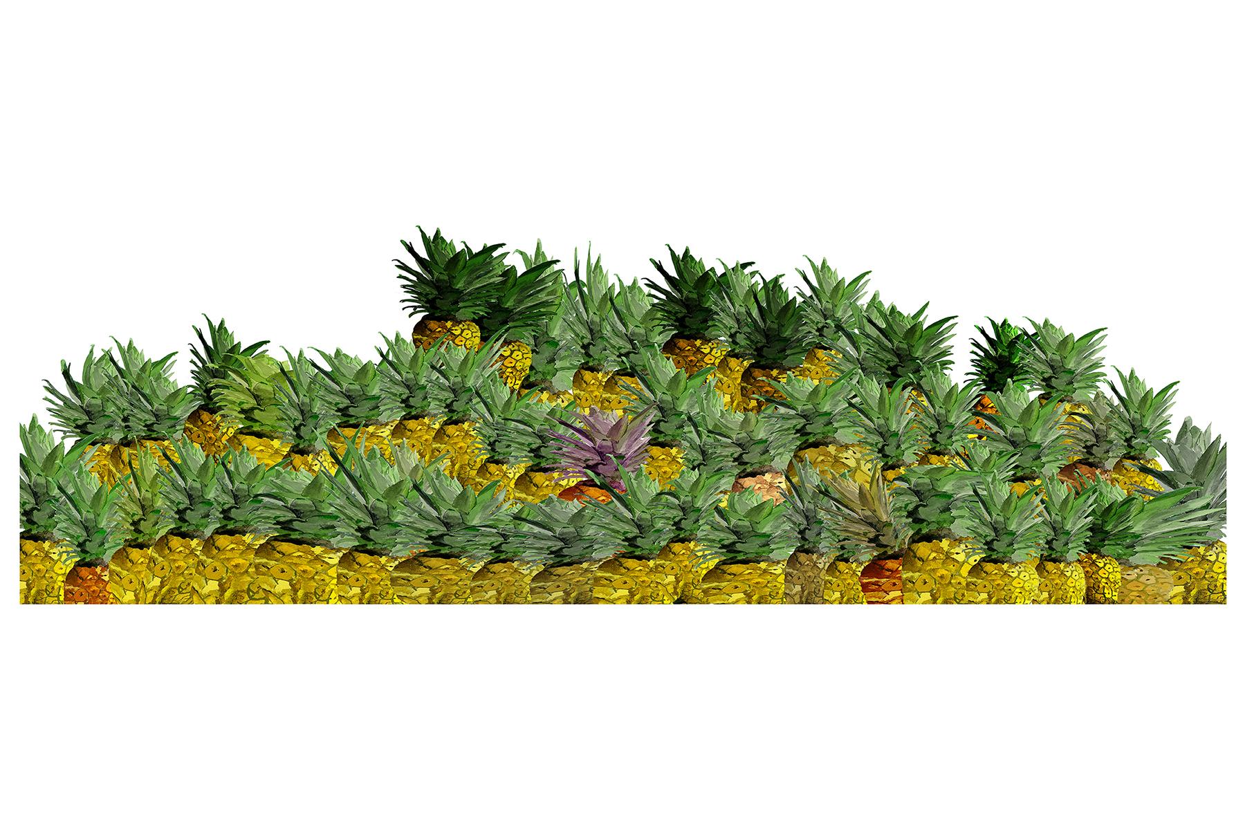 Digital Pineapple
