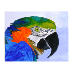 a 1 Parrot one, acrylic on canvas, 20'' x 16''