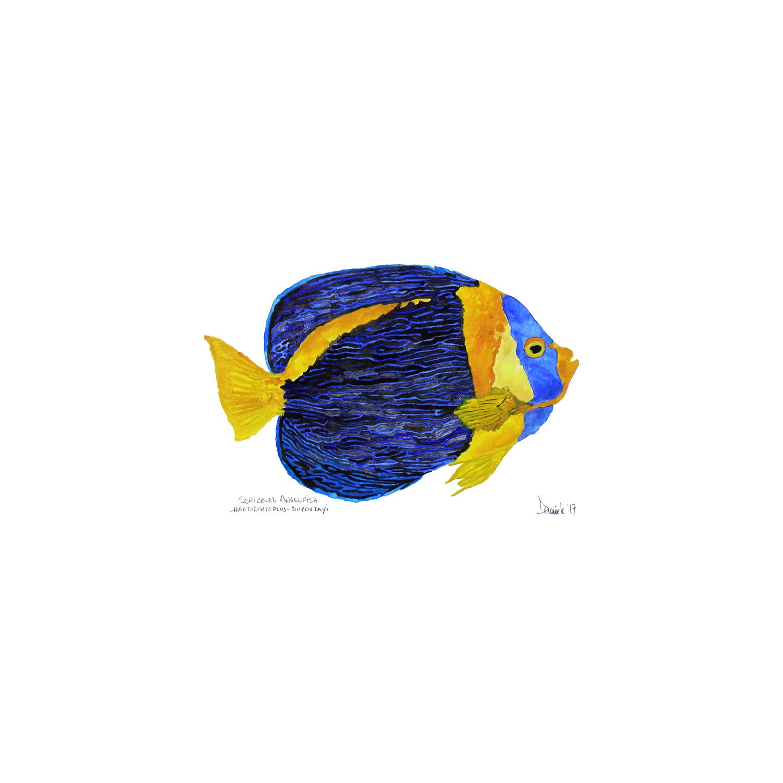 Scribbled Angelfish 2, 2017