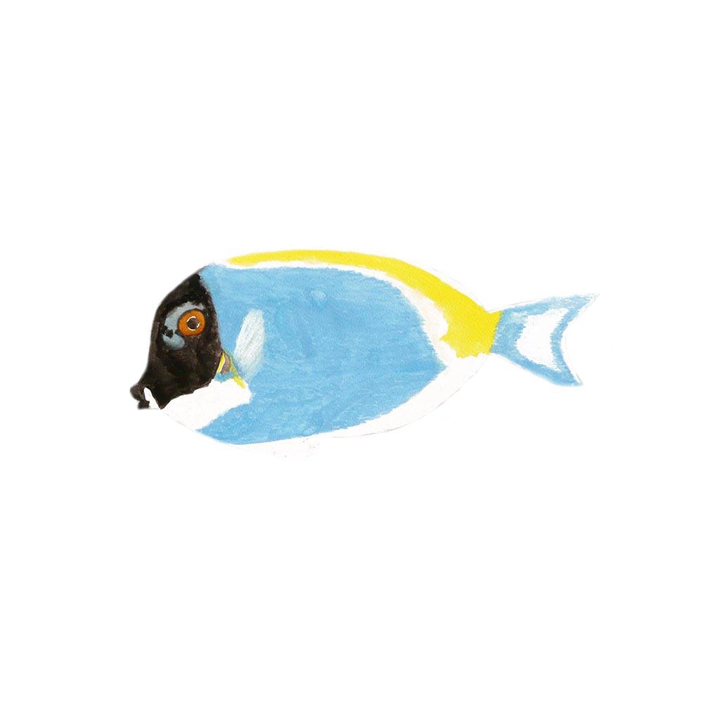No name fish
