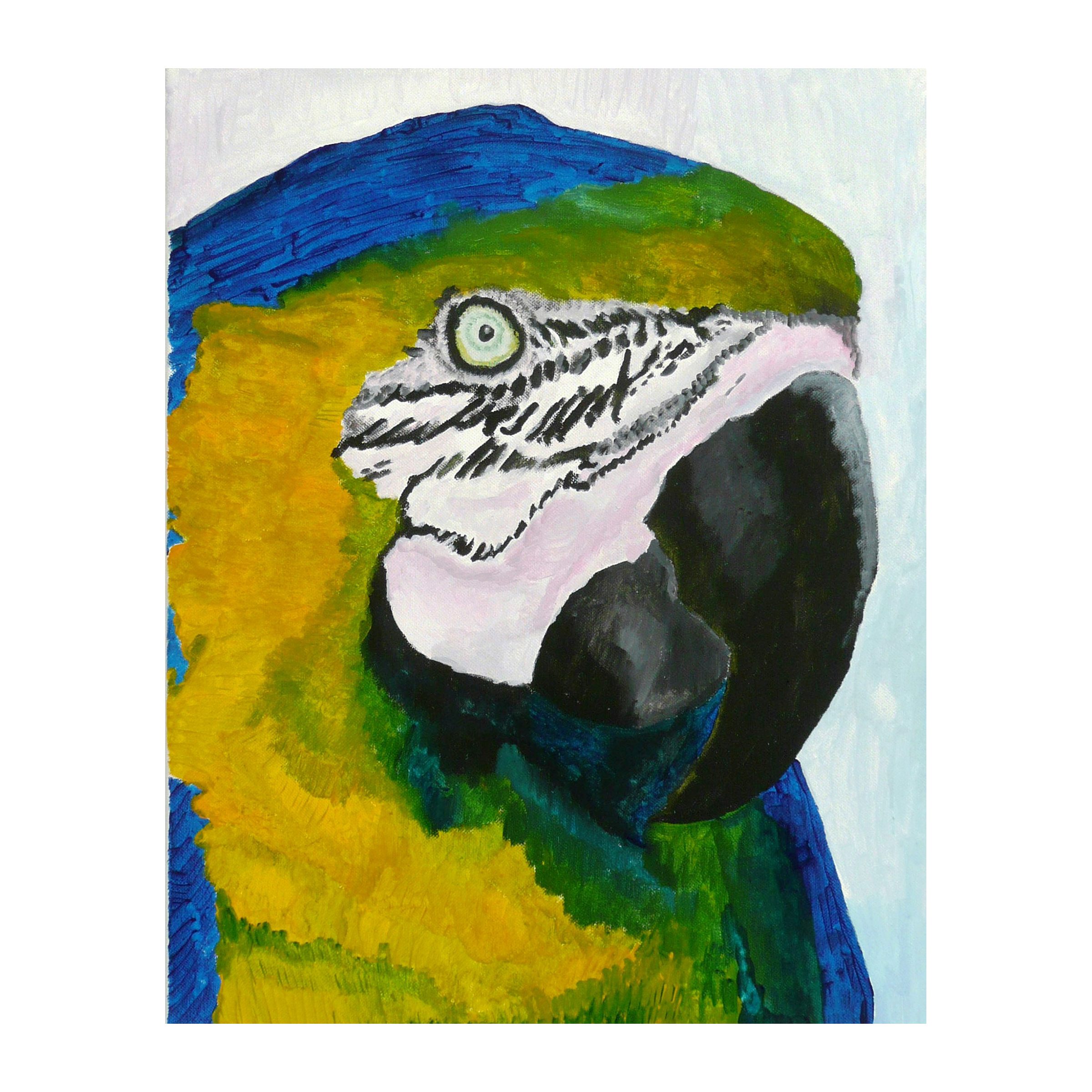 a 2 Parrot two, acrylic on canvas, 20 x 16