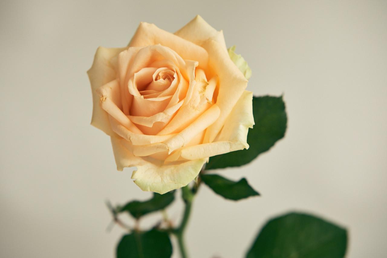 Flowers_1140.jpg