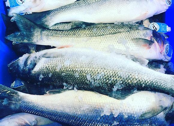 Wild Cornish Bass (1.2kg)