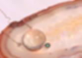 B6F78A29-77C8-4ED7-8432-4835E73A1366.PNG