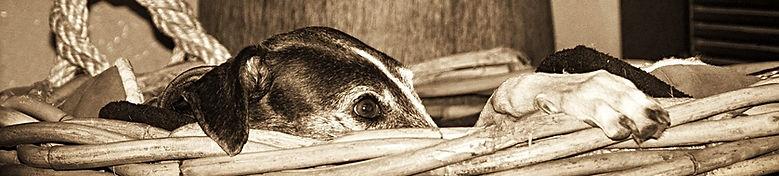 TraumAkzente Windhund-Accessoires, Galgo-Halsband, Whippet-Halsband