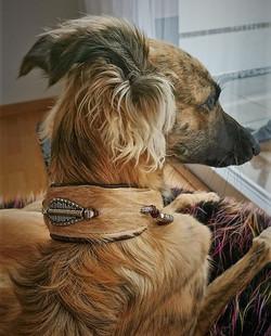 Silken Windsprite Halsbänder