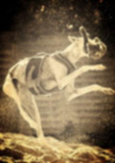 Windhundgeschirre, Galgo-Halsbänder, Whippet-Halsbänder, Greyhound-Halsbänder