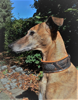 Whippet Halsband SILVER