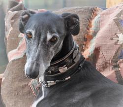Greyhound Halsband