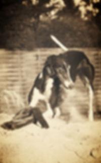Galgo-Halsbänder, Whippet-Halsbänder, Greyhound-Halsbänder