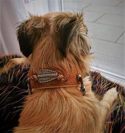 Silken Windsprite Halsband