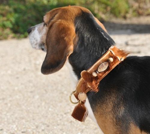 Fellhalsband, Beagle-Halsband