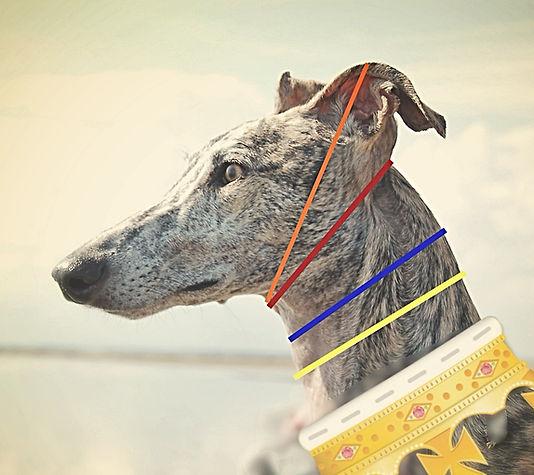 Windhundhalsband, Windhundhalsbänder, Galgo-Halsbänder, Whippethalsbänder, Greyhoundhalsbänder