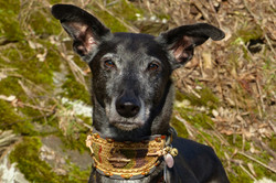 Greyhoundhalsband, Greyhound