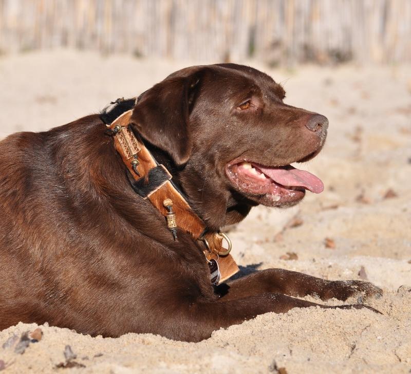 Labrador Fellhalsband