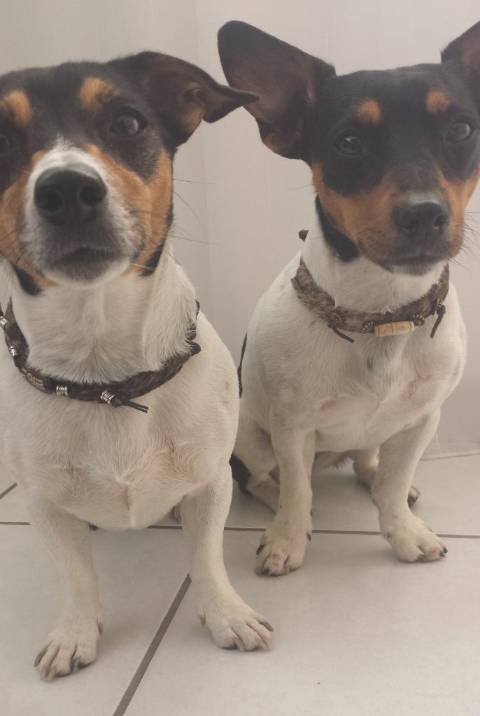 Holly und Mia mit Fellhalsbändchen