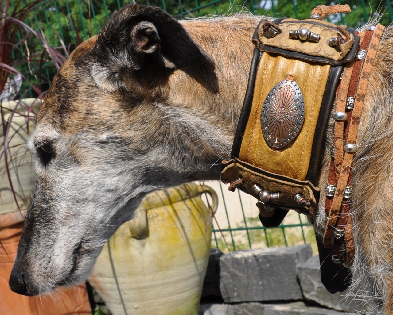 Windhundhalsband, Galgo-Halsband