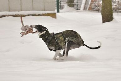 Windhundgeschirr safe'n cosy, Galgo-Halsbänder, Whippet-Halsbänder, Greyhound-Halsbände