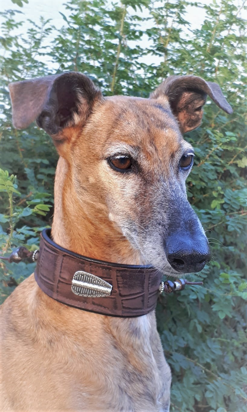 Whippet Halsband