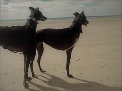 Greyhoundhalsbänder