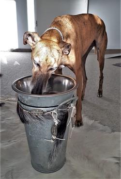 Dinnernapf für Windhunde